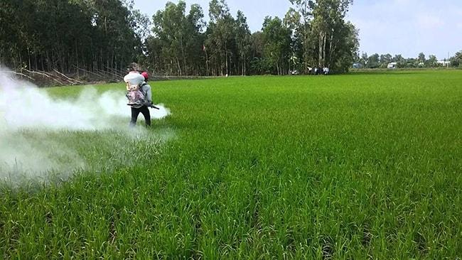 công dụng của vôi bột nông nghiệp